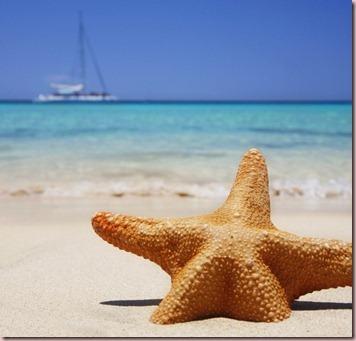 Starfishbeachwallpaper730x700_thumb1