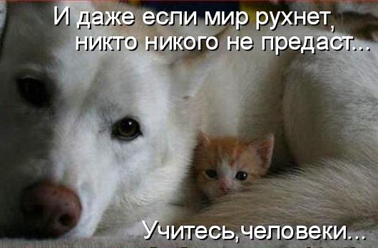 56061815_i_dazhe_esli_ves_mir_ruhnet