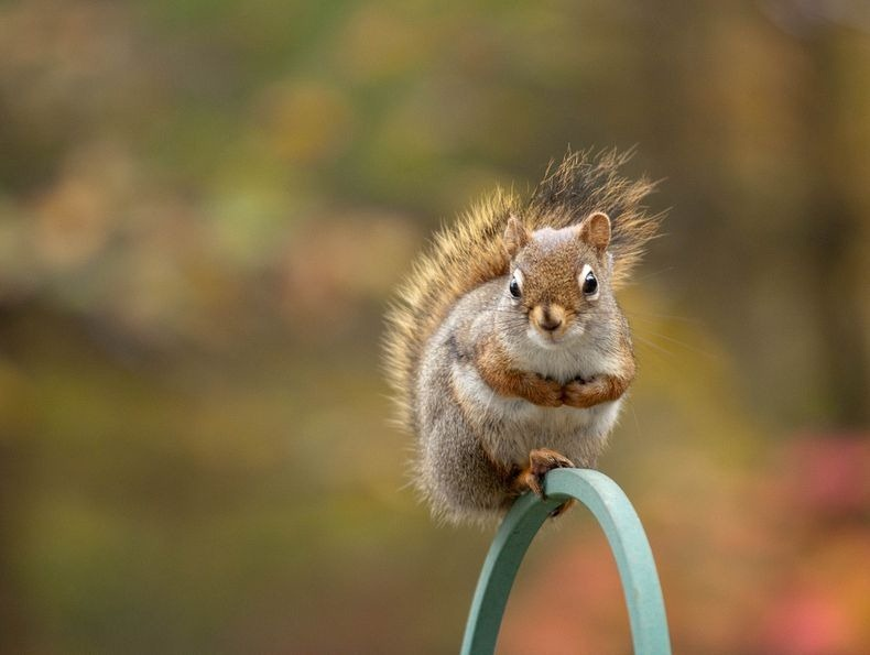 nancy-rose-squirrels-9