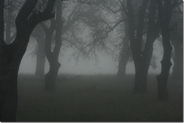 Florestas sombrias (7)