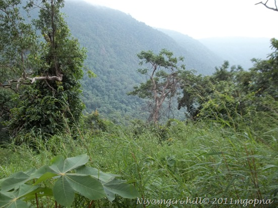 Niyamgiri Hills