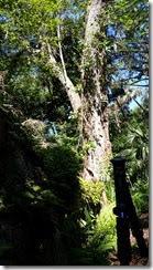 Big tree in the sun