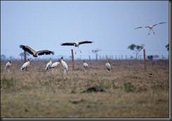 LL - birds taking off