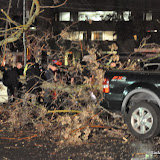 News_110319_TreeDownInjuries_16thAtJ