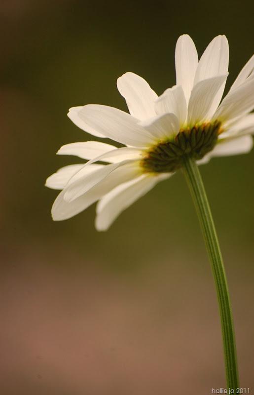 Fleur16