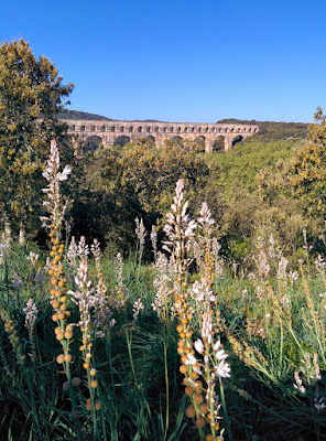 meadow and pont du gard.jpg