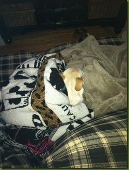 Higgins sleeping 1