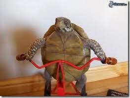 humor tortugas (40)