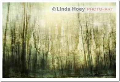 Untold Linda Hoey