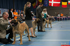 20130510-Bullmastiff-Worldcup-0290.jpg