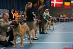 20130510-Bullmastiff-Worldcup-0290.jpg
