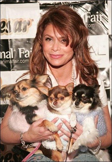 Paula Abdul cradles her three tiny dogs