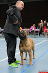 20130511-BMCN-Bullmastiff-Championship-Clubmatch-2298.jpg