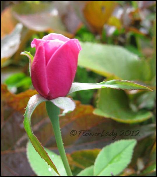 06-24-old-blush