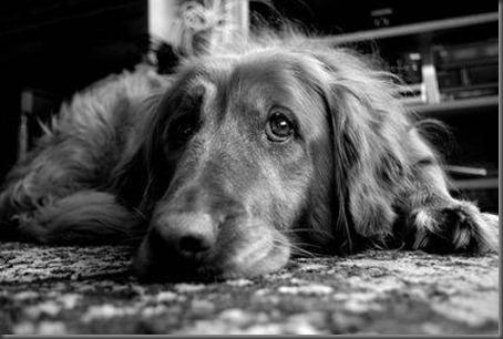 oldest-dogs-guinness-world-04