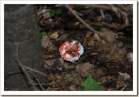 fungus 5