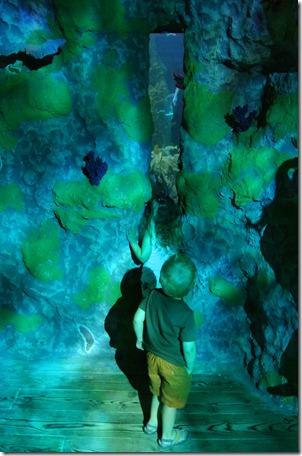 Sea Life Aquarium 146