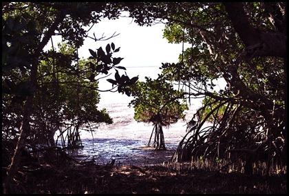 04h - Bay Shore Loop Trail - Mangroves and Florida Bay