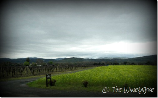 napa_fields_vineyards