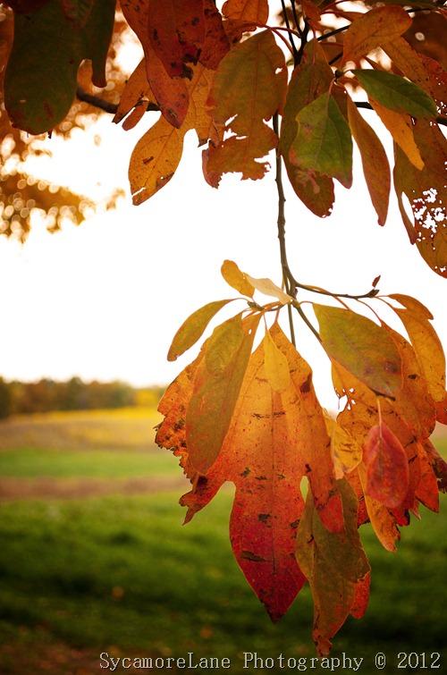 fall leaves 2012-1