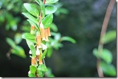 nybg-new-york-botanic-gardens-bronx-020