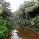 写真1 オイルパームプランテーション内の河川 / Photo1 Small stream inside the oil plantation.