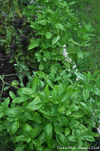 Garden Basil
