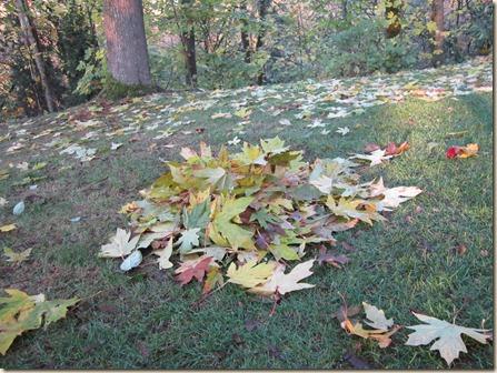 11-15 leaves 1