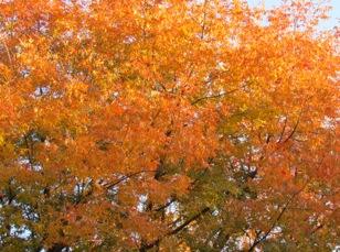 BoyceThompsonArboretumStatePark-75-2011-11-28-19-40.jpg