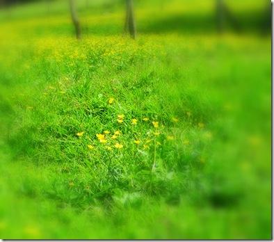 2011_0104rio0010