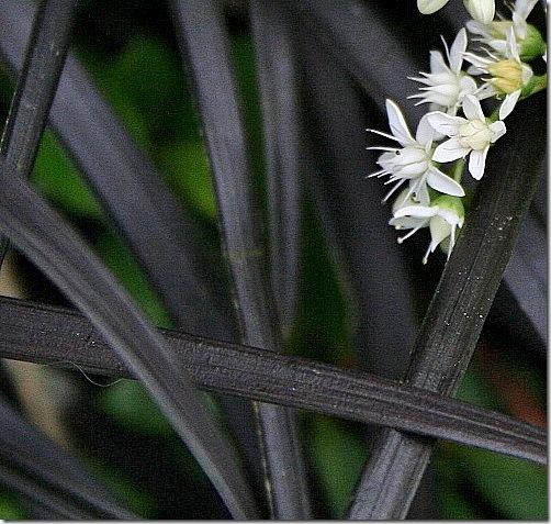 garden-blackwhite-close2