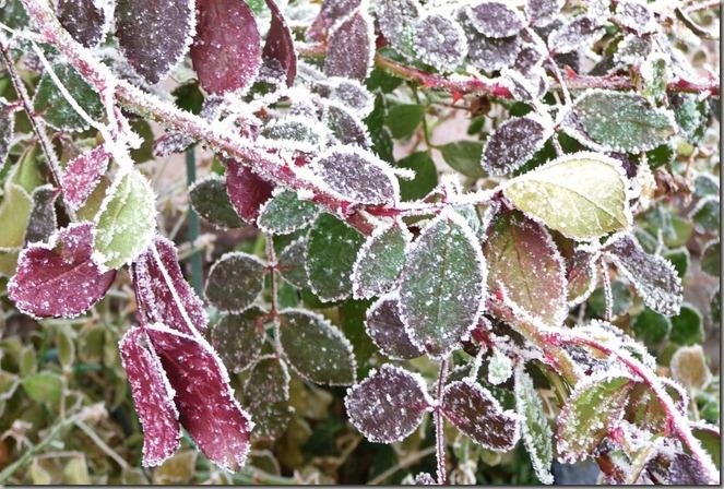 frosty 004 (2)