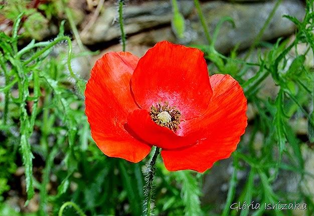 Glória Ishizaka - flor 14