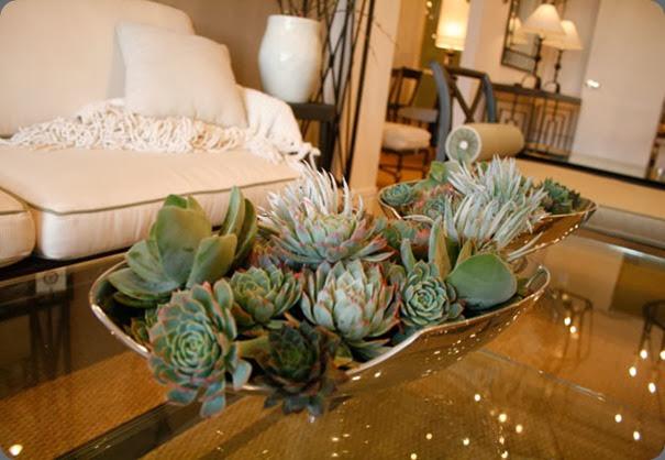 succulents february-2010-030 lila b