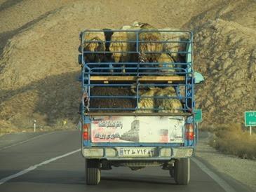 Iran (102)