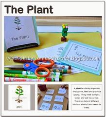 theplant
