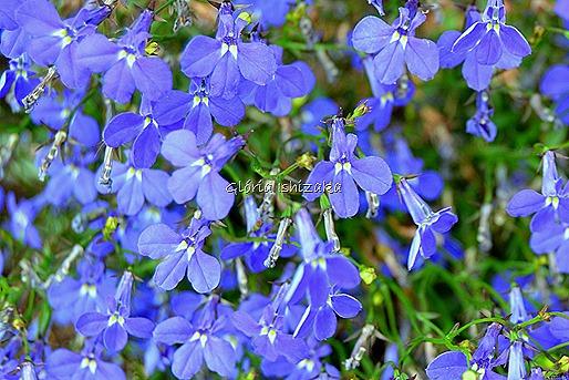 Azul - Glória Ishizaka 29