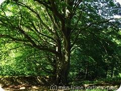 wesley tree 2