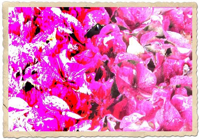 FLOWER-GRADIENT-2