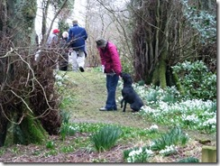 drm c snowdrops Ailsa and dog