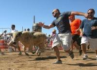 Bull Running US