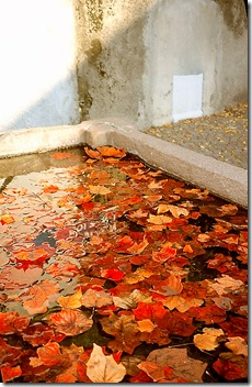 Fontana Cornaiano Foglie3-001