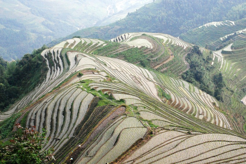 rice-terraces-15