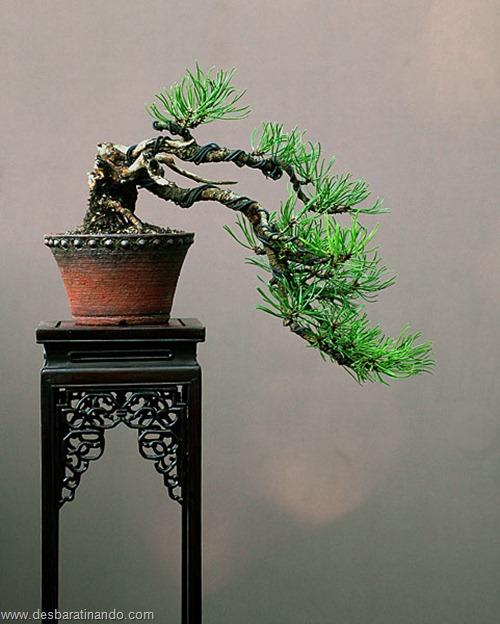bonsais arvores em miniatura desbaratinando (5)