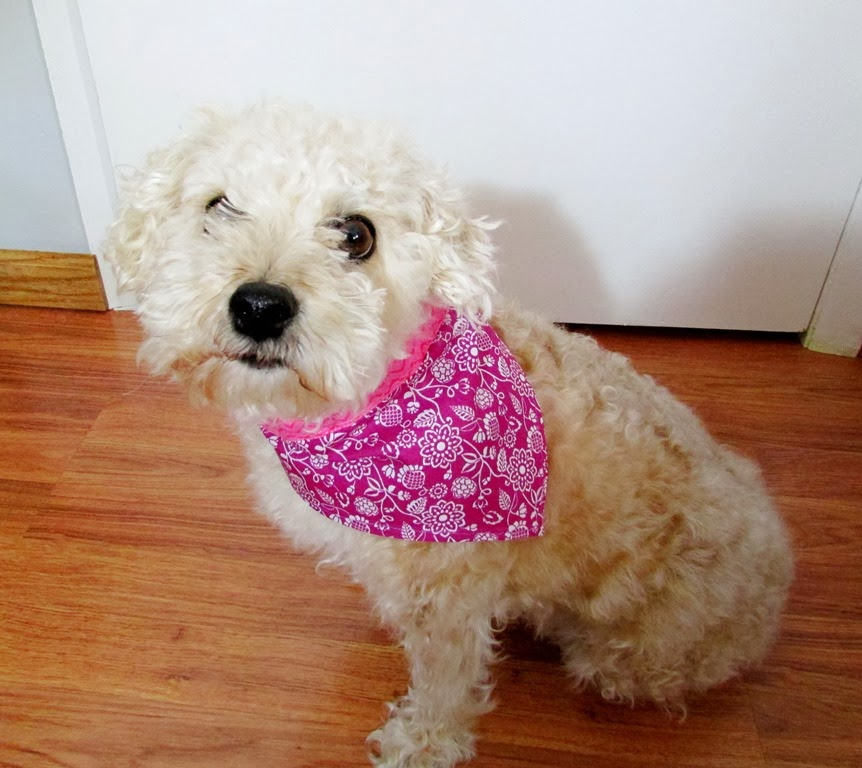 Best Sewing Projects for Pets: Pet Bandanna