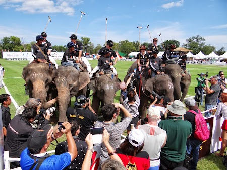 15. Celebritati pe elefanti.JPG