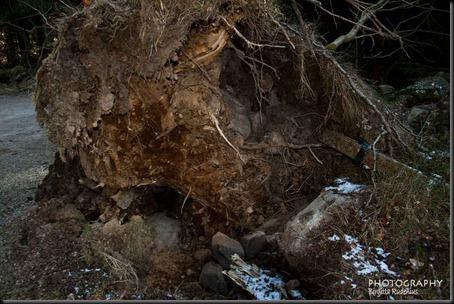 tree_20120408_fallen