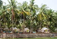 Palm groves at Cola