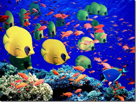 Great-Barrier-Reef-Holiday-Reef-Fish