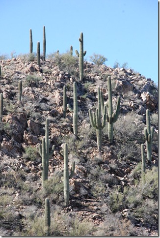 01-02-12 Saguaro National Park - West 055
